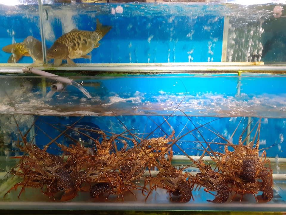 Bể hải sản tươi sống tại Nhà Hàng Hải Sản Canary